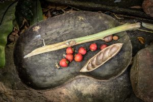 Australian native ingredients and bush tucker are a growing food & beverage trend